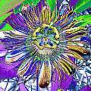 Abstract Passion Flower Poster