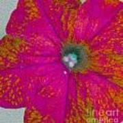 Abstract Petunia Poster