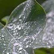 Abstract Rain Glitter Poster