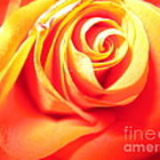 Abstract Rose 2 Poster