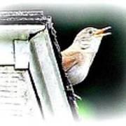 Abstract Songbird Poster