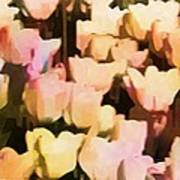 Abstracted Tulips Poster