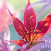 Acer Beautiful Fall Poster