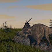 Achelousaurus Grazing In Swamp Poster