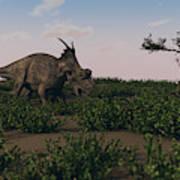 Achelousaurus Walking Amongst Swamp Poster