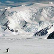 Adelie Penguins Trekking On The Ice Poster