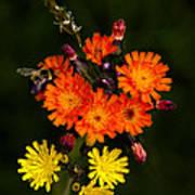 Adirondack Flowers Poster