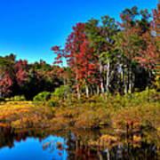 Adirondack Stream In Autumn Poster