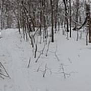 Adirondack Woods 3 Poster