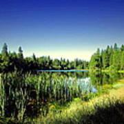 Admiring The Beauty At Woodbridge Lake Poster