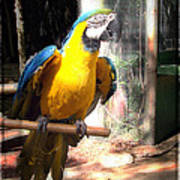 Adopted Macaw - Rescued Parrot Poster