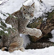 Adorable Baby Lynx In A Snowy Forest Poster