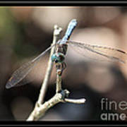 Adorable Dragonfly With Border Poster