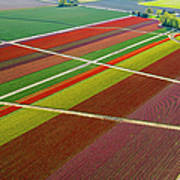 Aerial View Of Colorful Tulip Fields Poster