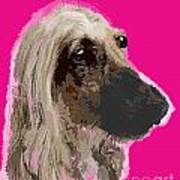 Afghan Hound Pink Poster
