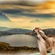 Afghan Hound Poster