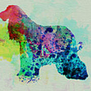 Afghan Hound Watercolor Poster