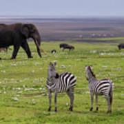 Africa Tanzania African Elephant Poster