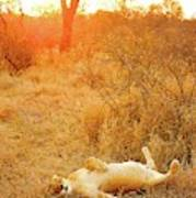 African Mammals Poster