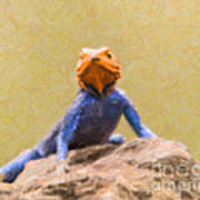 Agama Lizard On Rock Poster