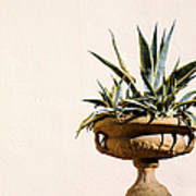 Agave In Pot Poster