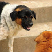 Aggressive Dogs Poster