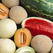 Agriculture - Mixed Melons, Watermelon Poster