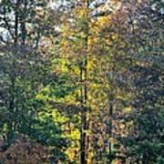 Alabama Forest In Autumn 2012 Poster