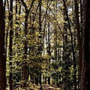 Alabama Woodlands In Spring 2013 Poster