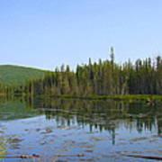 Alaska River Swamp Poster