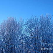 Alaska Sunrise Lighting Willows In Winter Poster