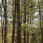 Aldridge Lake Trail Poster