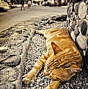 Alley Cat Siesta In Grunge Poster by Meirion Matthias