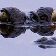 Alligator Eyes On The Foggy Lake Poster