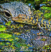 Alligator Mother's Day Poster