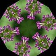 Allium 2 Poster