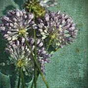 Allium Wildflower With Grunge Textures Poster