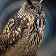Almeria Wise Owl Living In Spain  Poster