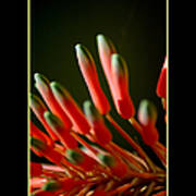 Aloe Bloom Window 2 Poster