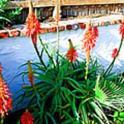 Aloe In Bloom Poster