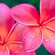 Aloha Hawaii Kalama O Nei Pink Tropical Plumeria Poster