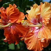 Aloha Keanae Tropical Hibiscus Poster