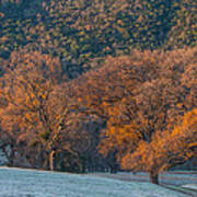 Along Miwok Trail In Winter Poster