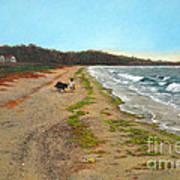 Along The Shore In Hyde Hole Beach Rhode Island Poster