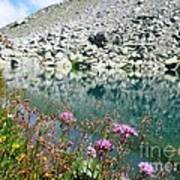 Alpine Lake And Flora Poster