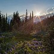 Alpine Meadow Sunrays Poster