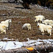 Alpine Mountain Goats Poster