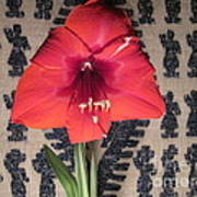Amaryllis Flower With Guatemalan Mountain Blanket Poster by Elizabeth Stedman