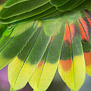 Amazon Parrots Feathers Abstract Poster