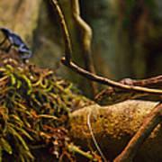 Amazon Tree Boa Poster